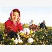 供应采棉机工作原理图大型采棉机原理采棉机厂家 采棉机生产厂家