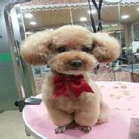 专业宠物美容医院