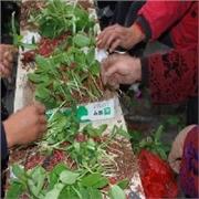 蔬菜种植培训,蔬菜种植哪里好,蔬菜种植技术员 寿光三元朱农业