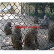 动物园围栏网厂家及规格,价格