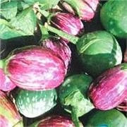 供应观赏茄 彩茄种子又名鸡蛋观赏茄 彩茄种子又名鸡蛋茄