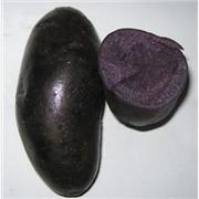 供应黑土豆种子,黑金刚,黑美黑土豆种子,黑金刚,黑美人