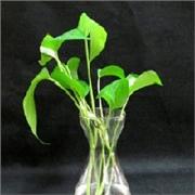 徐州市优质的风信子玻璃瓶价格