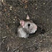 甘肃省可靠的兰州绿色环保灭鼠,您的首选