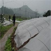 冠辰塑料厂供应物超所值农用大棚膜,代理农用大棚膜
