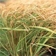 规模最大的农作物种植开发推荐_徐州油料