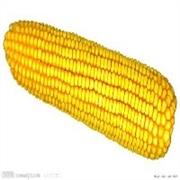 资阳市玉米收购牌子怎么样? 现金采购黑龙江玉米