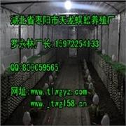 壁虎代理,南京市知名的壁虎养殖供应商推荐