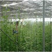 河池大棚_农腾温室大棚制作安装公司出售合格的温室大棚
