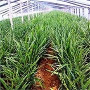 山东灌浆膜——价格适中的大姜专用农膜怎么样