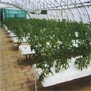 山东省花卉大棚温室 价格合理的花卉大棚温室首选金阳温室工程公司