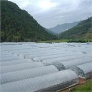 鲁光塑料制品——优质消雾膜供应商_河北消雾膜