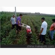 供应甘蔗开沟培土机 大葱开沟培土机