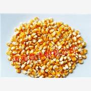 供应河南鑫丰150吨玉米深加工成套机组