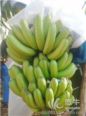 供应香蕉香蕉001广东香蕉代办 湛江香蕉产地