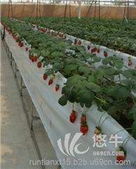 大棚水果灌溉蔬菜大棚滴灌管