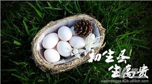药用复合包装材料 产品汇 嘉兴鸽子蛋的药用价值【小孟鸽】原